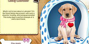 Spiel - My Dog Quiz