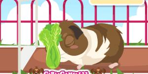 Spiel - Guinea Pig Care