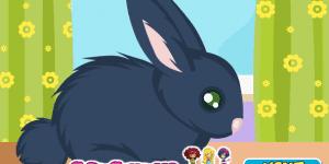 Spiel - Rabbit Care